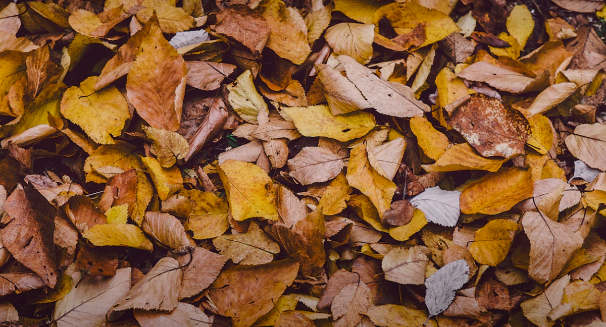 fallen leaves, autumn leaves, fall leaves, leaf mulch