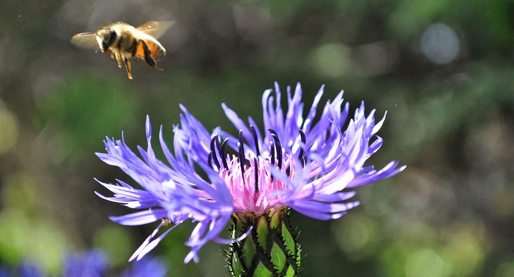 spring, spring flowers, spring flower, spring gardening, zone 5a, Ontario gardening, spring garden canada, bee, pollinators