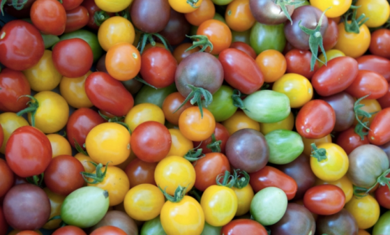 cherry tomatoes, grape tomatoes, currant tomatoes, yellow cherry tomatoes, orange cherry tomatoes, heirloom tomatoes, heirloom cherry tomatoes
