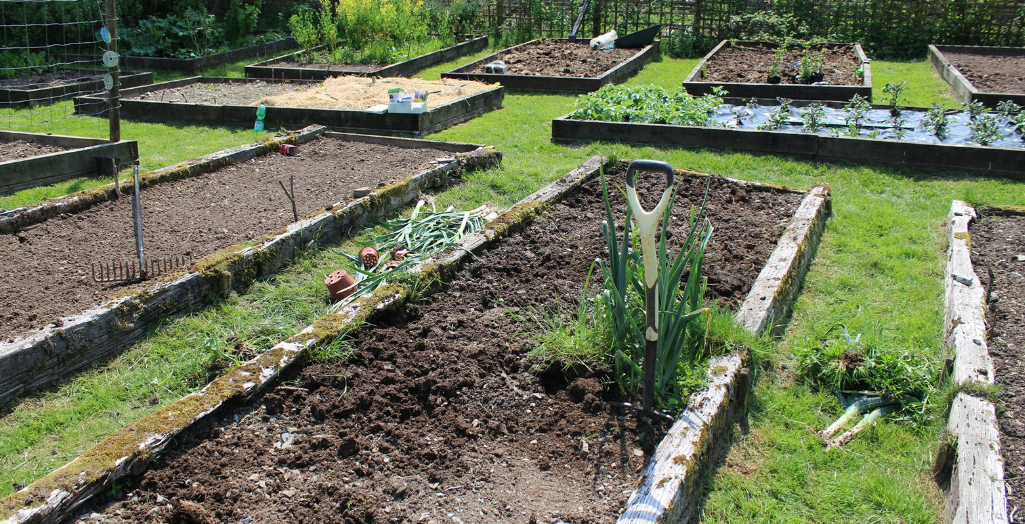 raised beds, raised garden beds, vegetable beds, raised vegetable beds