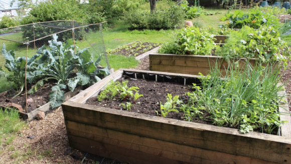 raised beds, raised garden beds, garden beds
