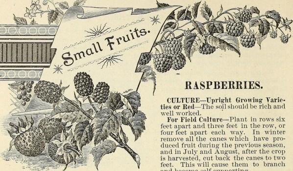 raspberrycane.jpg