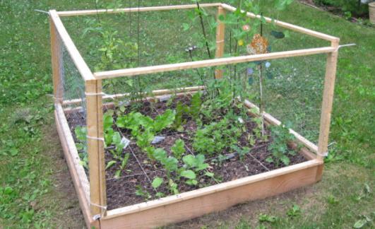 garden fence, chicken wire, chicken wire fence, chicken wire garden fence, garden fencing