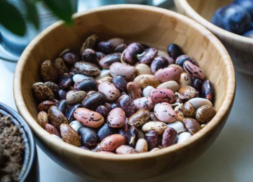 saving beans, saving peas, saving dried beans, dry beans, dried beans