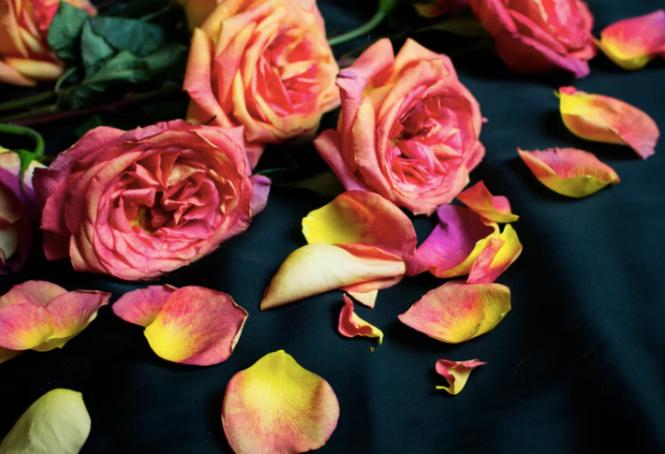 roses, rose petals, dried rose petals, rose petal treats, edible flowers, edible roses