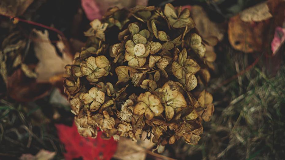 autumn garden, dead plants, putting the garden to bed