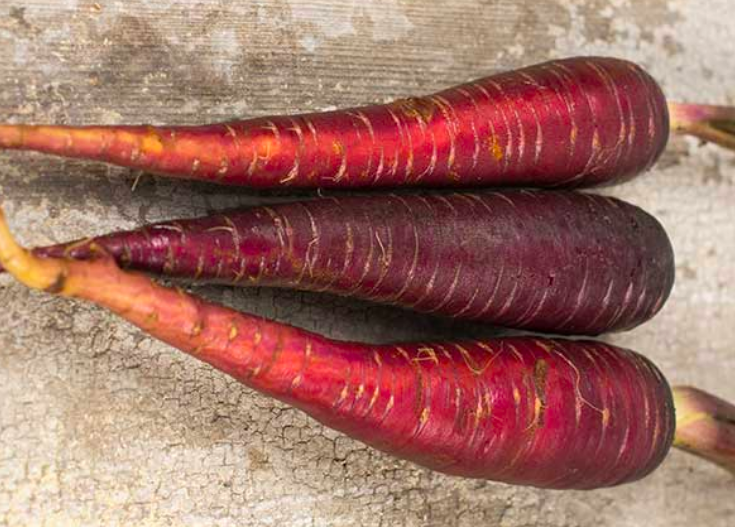 medieval carrots