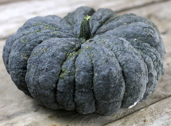 black pumpkin, Thai black pumpkin, Thai kang kob