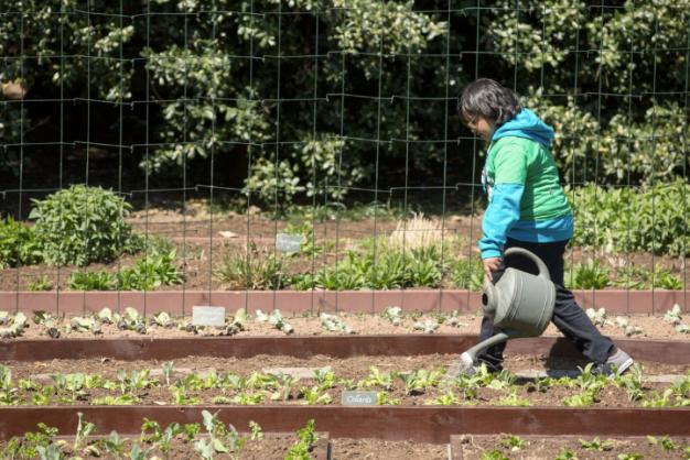 urban garden, community garden, urban gardening