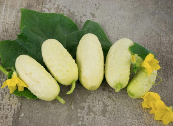 mini white cucumber, mini cucumber, mini vegetables
