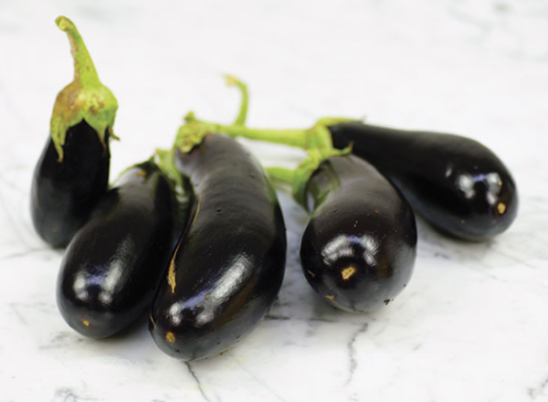 black eggplant, Syrian eggplant