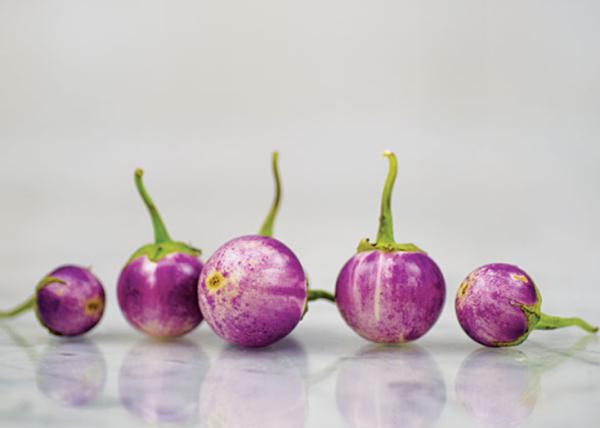 Thai lavender frog egg eggplant, mini eggplant