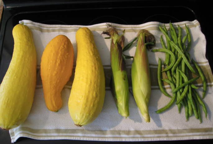 three sisters garden, 3 sisters, three sisters, corn beans and squash