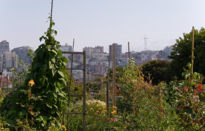 urban garden, urban farm, urban farming, urban gardening