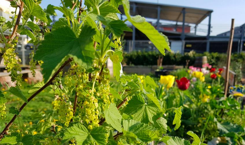 urban gardening, urban garden, rooftop garden, community garden