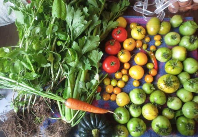 Soup Garden Harvest